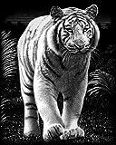 Reeves Kratzbild Silber Weisser Tiger