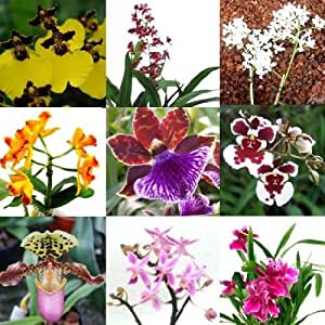 une orchid e fleurit dans un pot planter une surprise deux panicules orchid e jardin. Black Bedroom Furniture Sets. Home Design Ideas