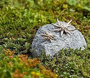 Bronze Statue, sculpture, edelweiss de petit et grand sur Granit Forêt Noir