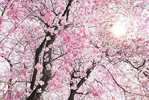 Komar XXL4-046Komar-Ciliegio Scenic parete carta da parati Bloom (368x 248cm)-Bianco, Rosa (-)