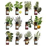 Kit aromathérapie - Lot de 12 huiles essentielles 10ml 100% pures et naturelles....