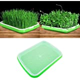 Tray Soil-Free Large Capacity with Cover Seedling Tray Bean Sprout Plate Hydroponic for Home Kitchen Use NOBRAND JUNGLE-A Seed Sprouter