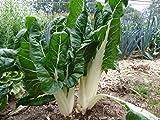 Graine de Poirée verte à carde blanche 3 blette bette (5 grammes)
