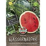 Vietnam Milch Melone,Seltene Melone Organische Gem/üsesamen f/ür Garten Balkon//Terrasse