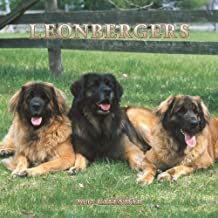 suchergebnis auf f r leonberger kalender. Black Bedroom Furniture Sets. Home Design Ideas
