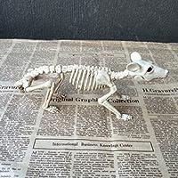 UU19EE Esqueleto de Rata 100% Huesos esqueléticos de Animales de plástico para la decoración de Halloween de Terror