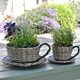 Plant Theatre 2 Willow Teacup Planters - Gift Boxed - Ideal Gift