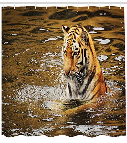 Curtain, Wild Life Safari Big Cat Tiger with Stripes in a African Lake Swimming Nature Print, Fabric Bathroom Decor Set with Hooks, 60 * 72inch Extra Wide, Multicolor ()