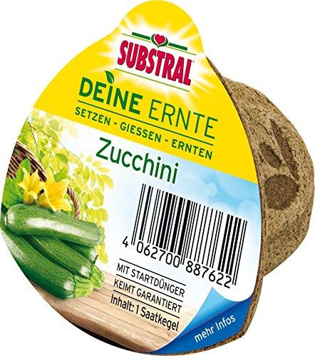 Substral Deine Ernte Saatkegel Zucchini Kegel aus Keimsubstrat, Dünger und Samen, 1 Stück