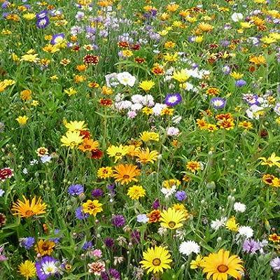 Profiline 4000159049307 Kiepenkerl Blumenmischung Amerikanische Mischung von Profiline bei Du und dein Garten