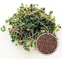 BIO Keimsaat Brokkoli Calabrese 500 g Brokkolisamen zur Sprossenzucht Sprossen Microgreen Mikrogrün