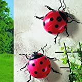 Pack Of 2 Jumbo Ladybirds - Garden, Patio, Wall, Fence Display Ornaments by sixstore - L-FENG-UK - amazon.co.uk