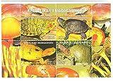 Tartarughe foglio Souvenir timbro di 4 francobolli da Madagascar 4000/800 valori / 1999 - Stampbank - amazon.it
