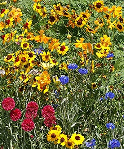 FLOWER MIX - DRY - NATIVE AND NEW WORLD ANNUALS - 10GM - 8 SQ METERS