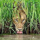 Wildlife Photographer of the year - Les plus belles photos de nature