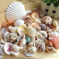 Bengal Handicrafts & Handlooms Fashion Aquarium Beach Nautical DIY Shells Mixed Bulk Sea Shell, 250 g