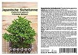 Seedeo Japanische Sicheltanne (Cryptomeria japonica)...