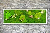 Pflanzenbild Moosbild mit lebenden Pflanzen 100 x 35 cm Wandbild mit Tillandsien Wanddeko Bilder Wandbilder kaufen Poster Moosbilder Pflanzenbilder (weiss)