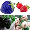 Erdbeere 100 Samen Strawberry von AZX bei Du und dein Garten