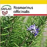 SAFLAX - Set de cultivo - Romero - 100 semillas - Rosmarinus officinalis