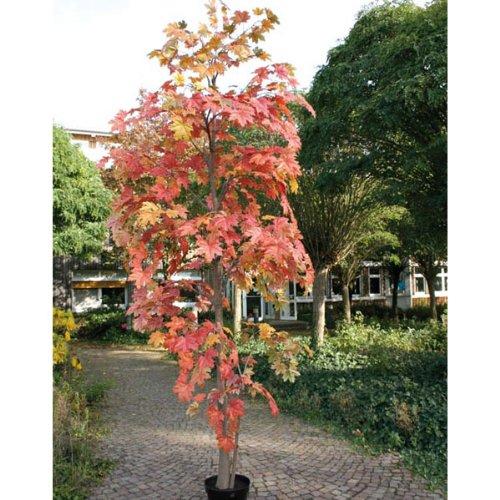 Künstlicher Ahornbaum getopft, 330 cm – Dekobaum