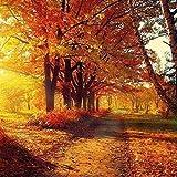 Herbst Bäume Blätter Weg Park 13