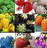 2100pcs 30kinds superbig Klettern Erdbeeresamen Gemüse Obst Samen einer Erdbeerpflanzen Balkonpflanzen Garten Pflanzen