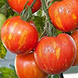 HERITAGE HEIRLOOM RED ZEBRA STRIPED SALAD TOMATO SEEDS. CERTIFIED FRENCH ORGANIC GROWER