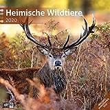 Heimische Wildtiere 2020
