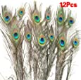 SWT 12PCS Natural Peacock Feathers --- (10-12) Inches Long --- Ideal for Decorative Applications