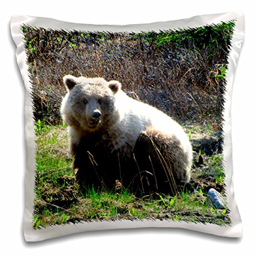 krista-funk-creations-bears-grizzly-bear-eating-roots-in-the-ditch-in-the-yukon-territory-canada-16x