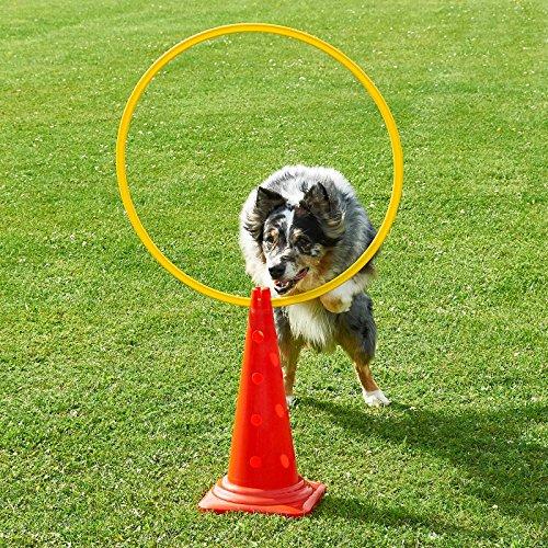 Superhund24 Kombi-Kegel 50 mit Kombi-Ring 70 cm, in 4 F… | 04260337373024