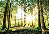 Olimpia Design Fototapete der Wald in der Sonne , 1 Stück, , 10143P4