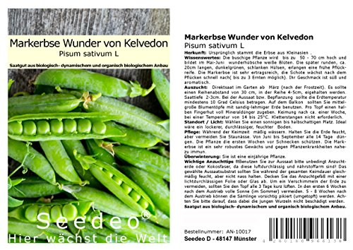 Seedeo® Markerbse Wunder von Kelvedon (Pisum sativum L) ca.100 Samen BIO