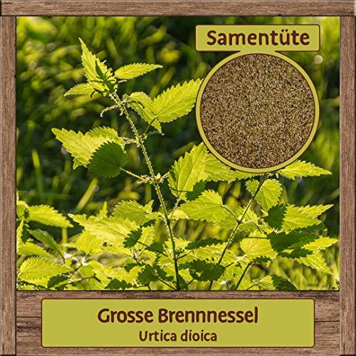 Samenliebe 40 verschiedene Sorten Kräuter-Samen - Große Auswahl & viele Sorten - Saatgut zum Pflanzen, Sorte:Grosse Brennnessel