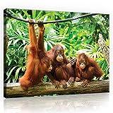Welt-der-TräumeWANDBILD CANVASBILD Wandbild Leinwandbild Kunstdruck Canvas | Orangutans im Dschungel | O1 (100cm. x 75cm.) | Canvas Picture Print PP10230O1-MS | Natur Tier Tiere Wild Wilde Affe Affen Orangutan