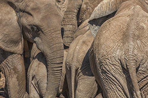 Addo Elephant National Park (The Poster Corp Robert Postma/Design Pics - Elephants Gather at a Watering Addo Elephant National Park; South Africa Photo Print (48,26 x 30,48 cm))