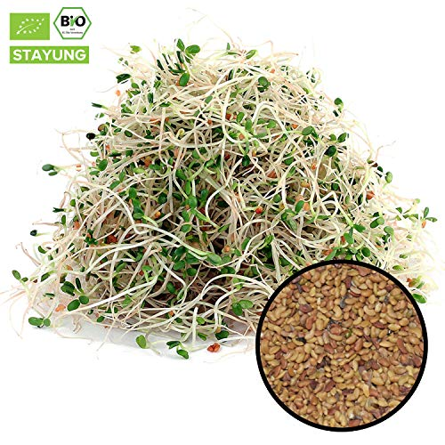 1000g Bio Alfalfa Samen (Luzerne) | 1 kg ✔ Keimsaat für Sprossen | Sprossenanzucht | Microgreen Mikrogrün | Keimfähig | SUPERFOOD | in kompostierbarer Verpackung | STAYUNG -