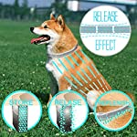 "fretod flea and tick collars for dogs cats - 8 month protection -adjustable 23"" length fits for small medium large pets FRETOD Flea and Tick Collars for Dogs Cats – 8 Month Protection -Adjustable 23″ Length fits for Small Medium Large Pets 61RbQzTXr9L"
