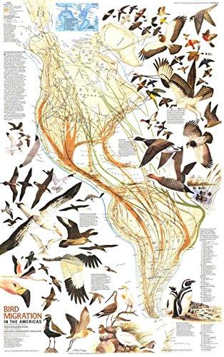 Reproduktion eines Poster Präsentation-America-Vogelzug (1969)-61x 81,3cm Poster Prints Online kaufen