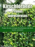 Kirschlorbeer - Prunus laurocerasus: Finden Sie den Kirschlorbeer, der Ihren Garten verändert