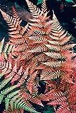 Shopmeeko Doppel 11 Freies Verschiffen 100 stücke Japanische Seltene Strampler Boston Fern bonsai Reben Gras Laub Pflanzen Zierpflanze Bonsai bonsa: Lila