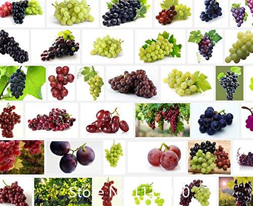 PROMOTION de 50 graines/paquet Rare Finger réseau pépins de raisin semences fruits pointe croissance naturel plantes de raisin chère fruits jardinage