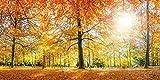 Artland Kunstdruck I Poster eyetronic Herbstwald Panorama Landschaften Wald Fotografie Orange A7QA