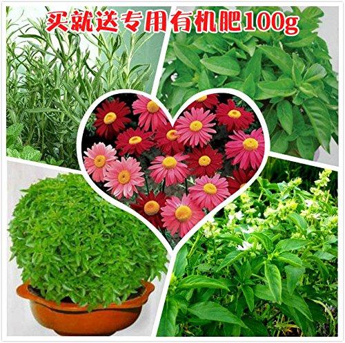 20-semi-pacchetto-semina-il-four-seasons-di-fiori-piante-dappartamento-balcone-unita-mosquito-semi-d