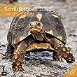 Schildkröten 30 x 30 cm 2015