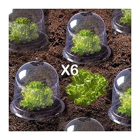 ProBache - Cloche à salades X6 serre de protection pour