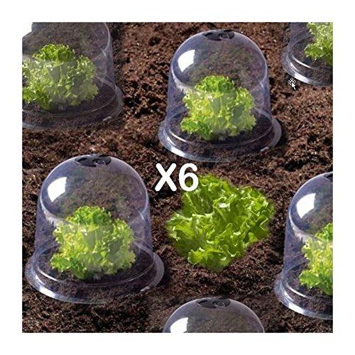 ProBache – Cloche à salades X6 serre de protection pour plants