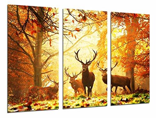 Cuadro Fotográfico Animal Ciervos Naturaleza, paisaje