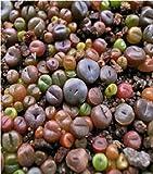 Fiore - Cactus - Living Stone - Lithops Mix - 20 Semi